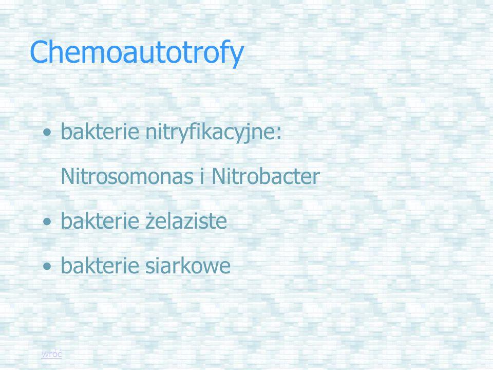 Chemoautotrofy bakterie nitryfikacyjne: Nitrosomonas i Nitrobacter bakterie żelaziste bakterie siarkowe wróć