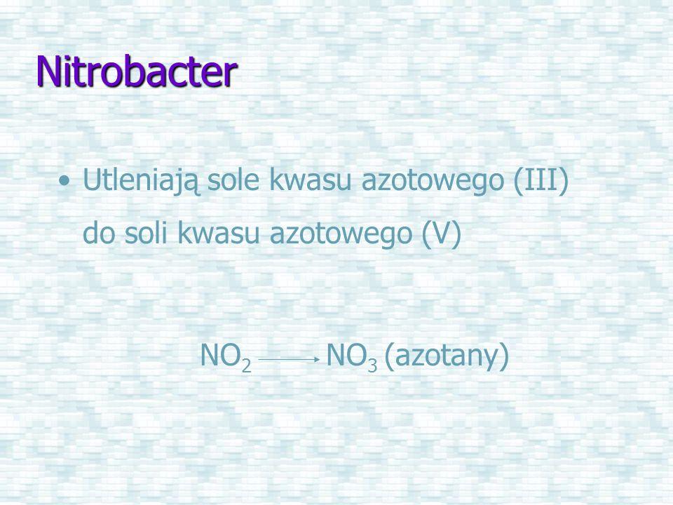 Nitrobacter Utleniają sole kwasu azotowego (III) do soli kwasu azotowego (V) NO 2 NO 3 (azotany)