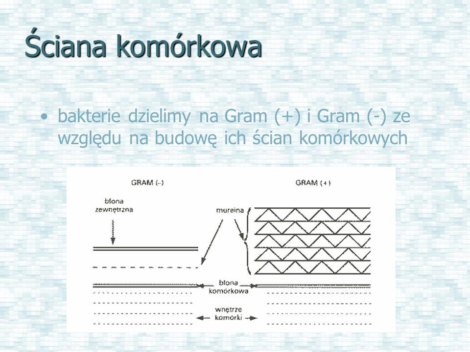 Ściana komórkowa bakterie dzielimy na Gram (+) i Gram (-) ze względu na budowę ich ścian komórkowych