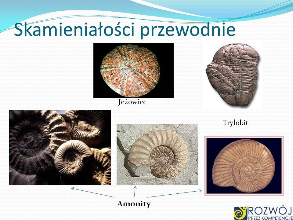 Skamieniałości przewodnie Trylobit Amonity Jeżowiec