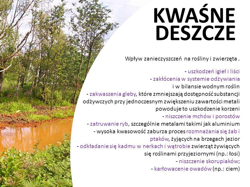 KWAŚNE DESZCZE Wpływ zanieczyszczeń na rośliny i zwierzęta. - uszkodzeń igieł i liści - zakłócenia w systemie odżywiania i w bilansie wodnym roślin -