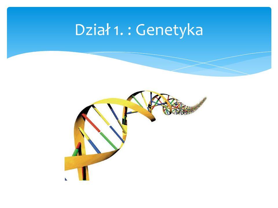 Dział 1. : Genetyka