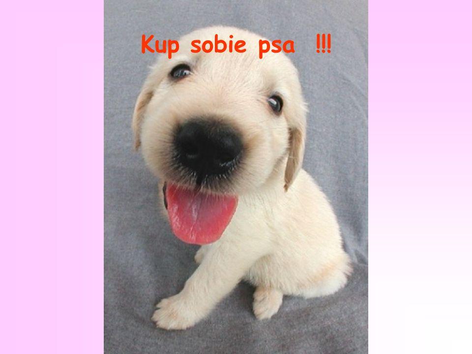 Kup sobie psa !!!