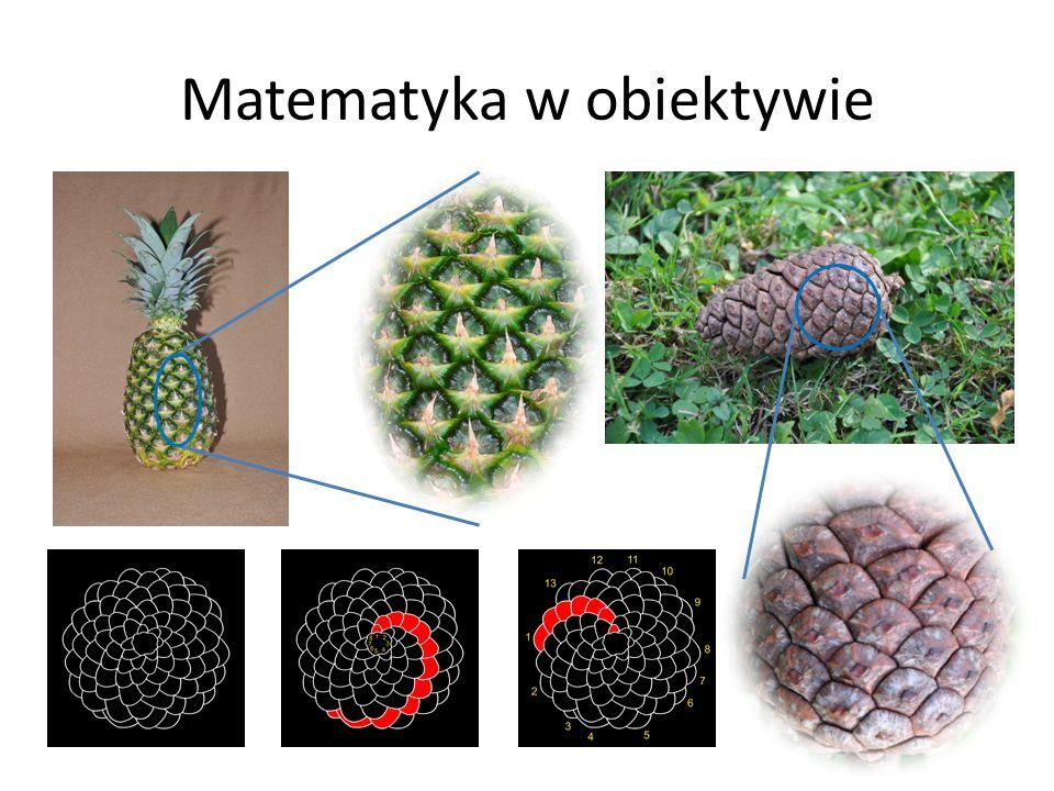 Matematyka w obiektywie