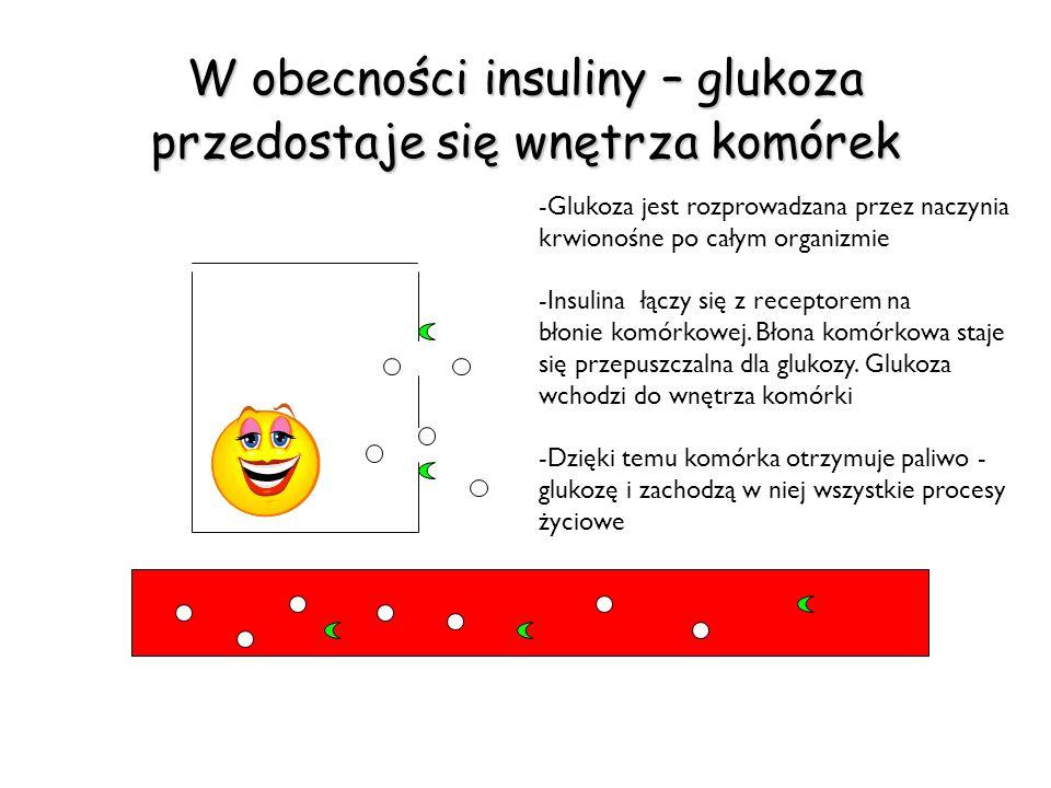 W obecności insuliny – glukoza przedostaje się wnętrza komórek -Glukoza jest rozprowadzana przez naczynia krwionośne po całym organizmie -Insulina łąc