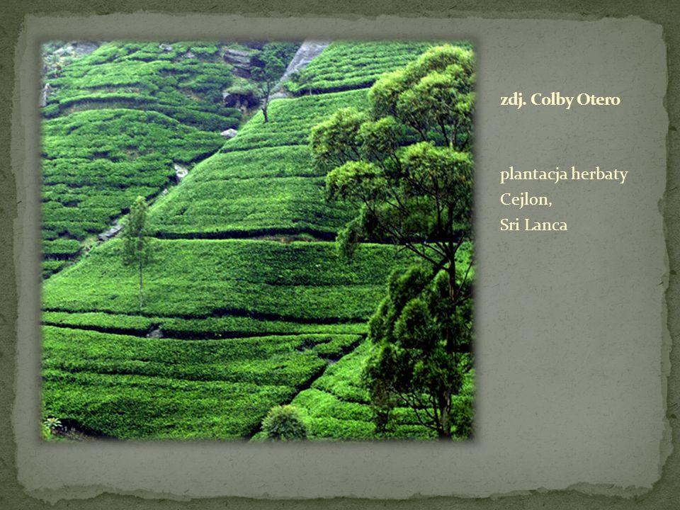 plantacja herbaty Cejlon, Sri Lanca