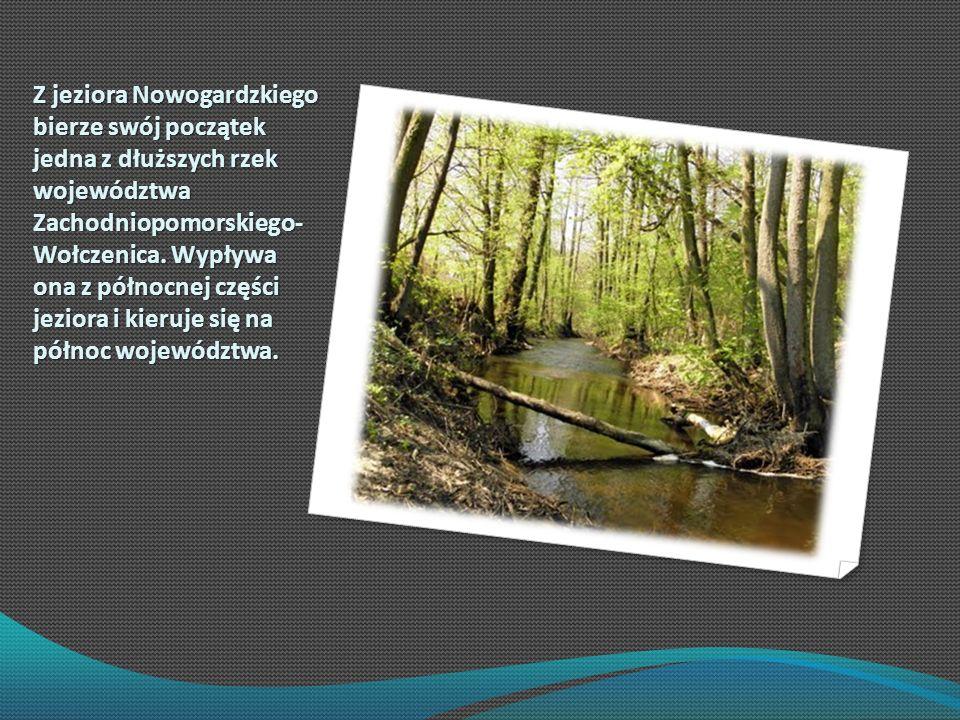 Z jeziora Nowogardzkiego bierze swój początek jedna z dłuższych rzek województwa Zachodniopomorskiego- Wołczenica. Wypływa ona z północnej części jezi