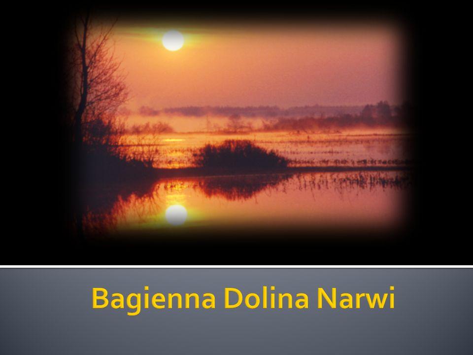 Bagienna Dolina Narwi jest to obszar chroniony programem Natura 2000 w województwie podlaskim.