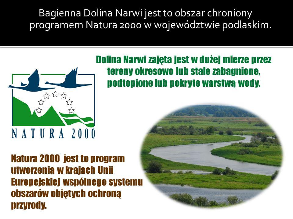Bagienna Dolina Narwi jest to obszar chroniony programem Natura 2000 w województwie podlaskim. Dolina Narwi zajęta jest w dużej mierze przez tereny ok