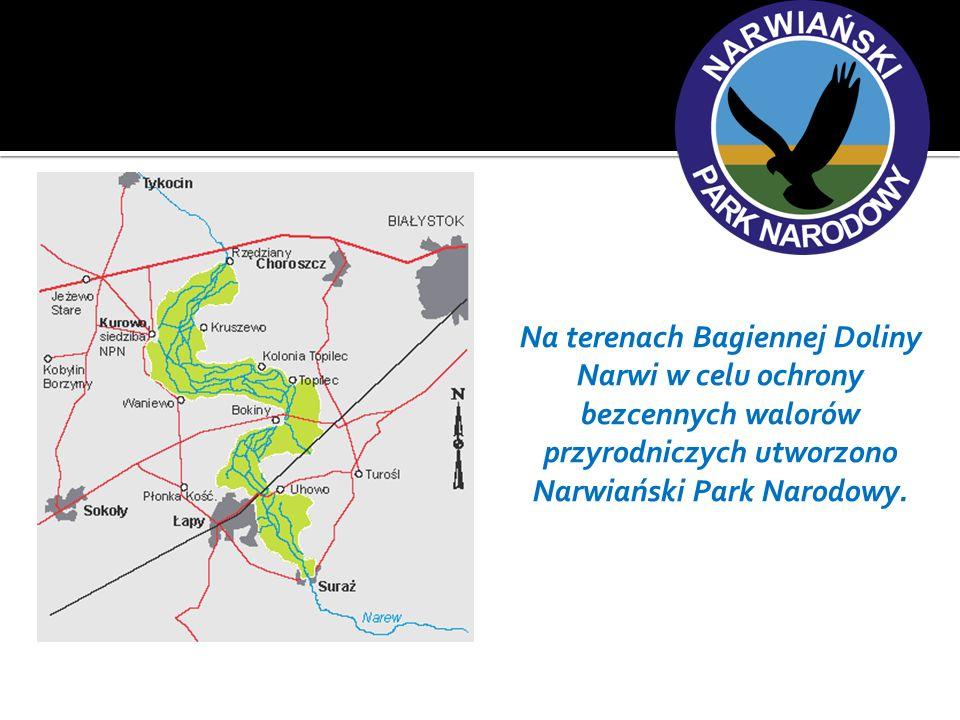 Narwiański Park Narodowy bez wahania można nazwać perełką na skalę europejską.