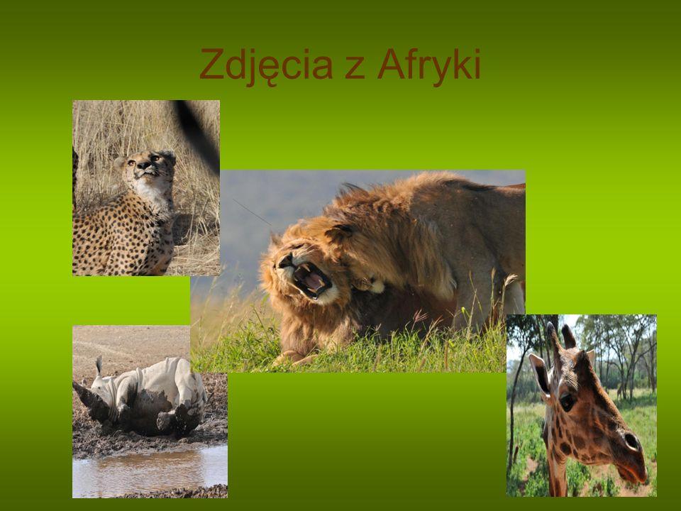Zdjęcia z Afryki