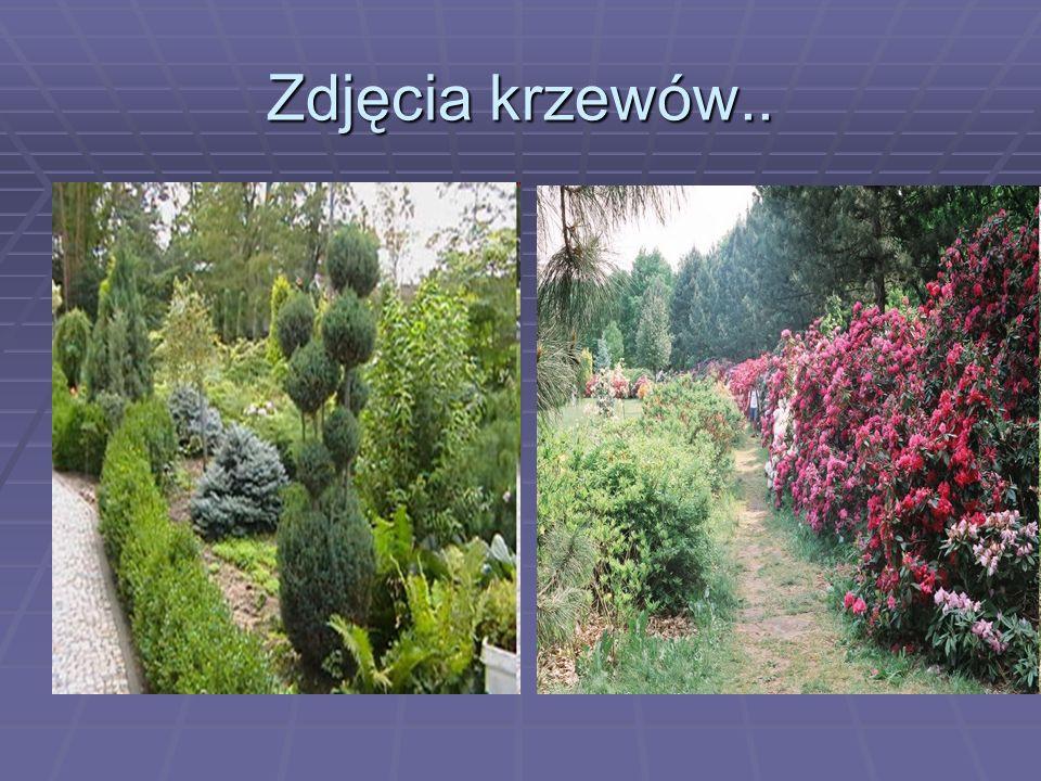 Zdjęcia krzewów..