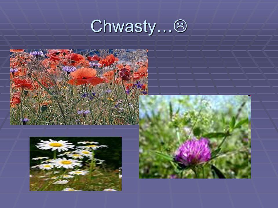 Chwasty… Chwasty…