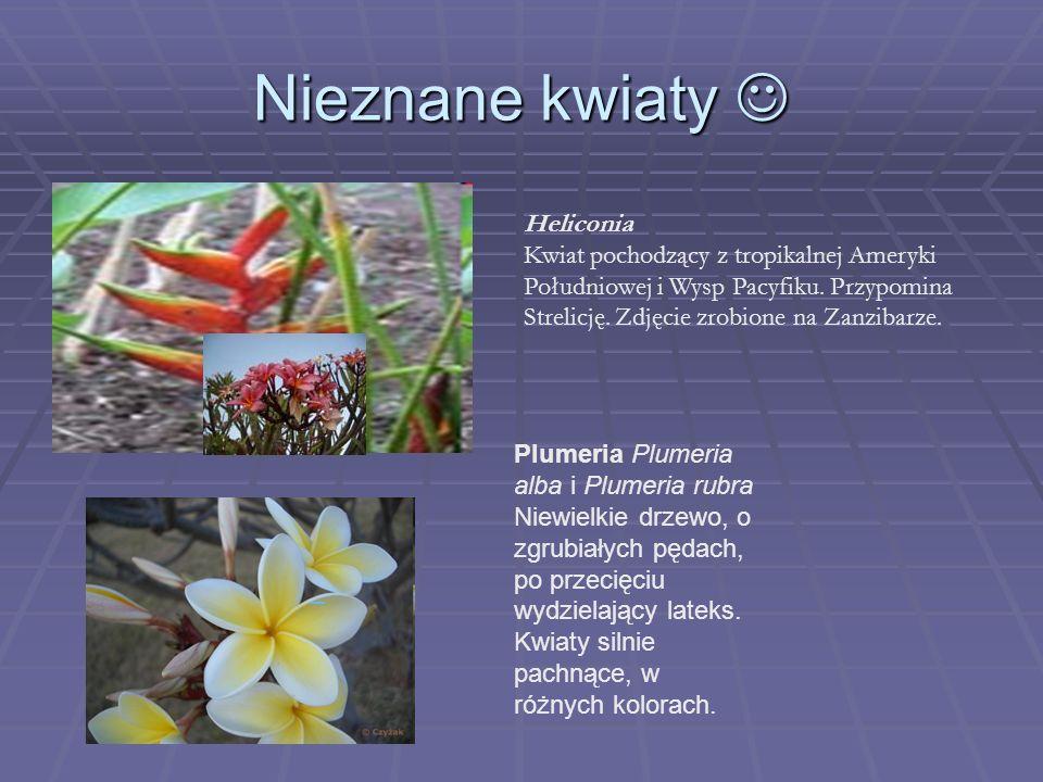 Nieznane kwiaty Nieznane kwiaty Heliconia Kwiat pochodzący z tropikalnej Ameryki Południowej i Wysp Pacyfiku. Przypomina Strelicję. Zdjęcie zrobione n