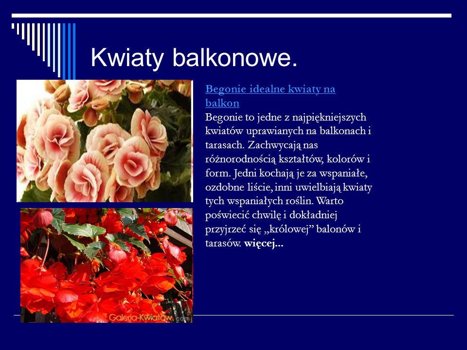 Kwiaty balkonowe. Begonie idealne kwiaty na balkon Begonie to jedne z najpiękniejszych kwiatów uprawianych na balkonach i tarasach. Zachwycają nas róż