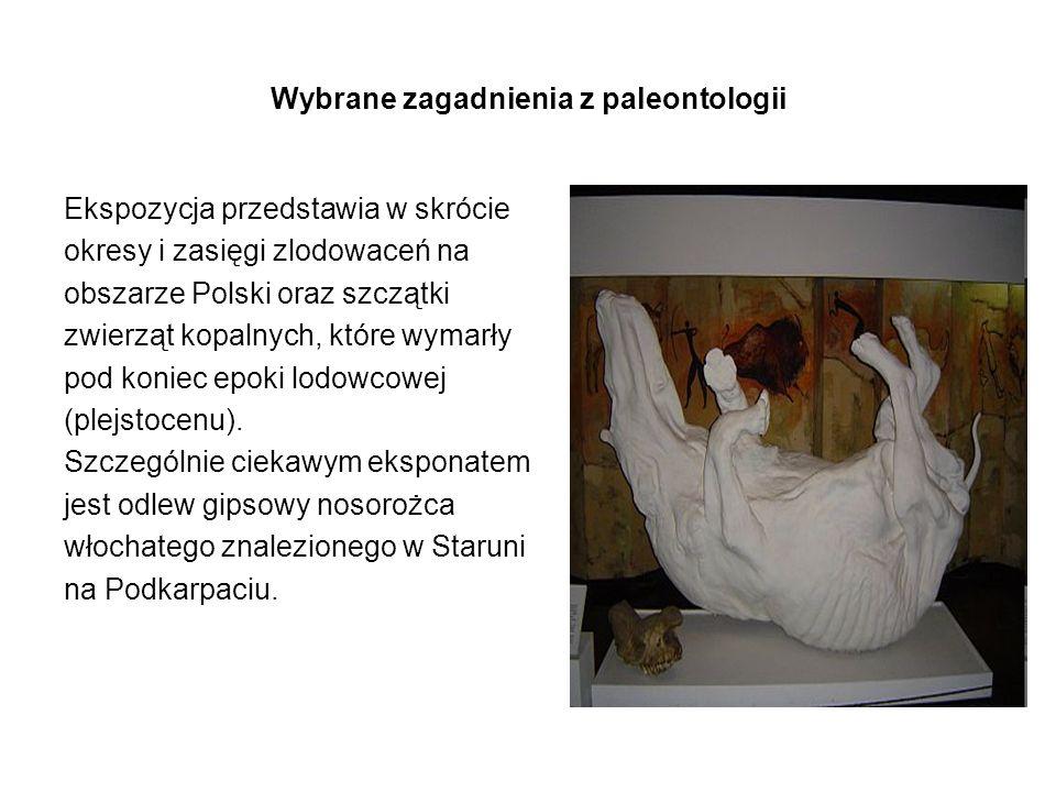 Wybrane zagadnienia z paleontologii Ekspozycja przedstawia w skrócie okresy i zasięgi zlodowaceń na obszarze Polski oraz szczątki zwierząt kopalnych,