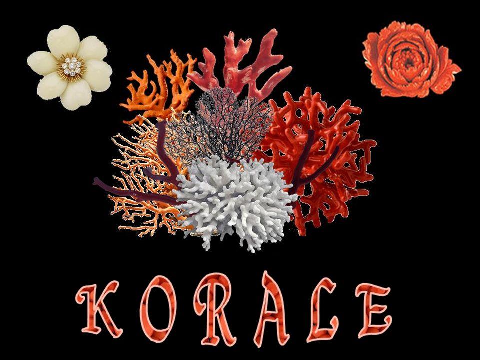 Wzdłuż Archipelagu Malajskiego występują korale czarne (Accarbaar) – najwyżej cenione w handlu.