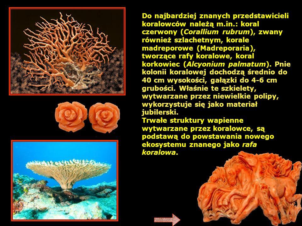 Do najbardziej znanych przedstawicieli koralowców należą m.in.: koral czerwony (Corallium rubrum), zwany również szlachetnym, korale madreporowe (Madreporaria), tworzące rafy koralowe, koral korkowiec (Alcyonium palmatum).