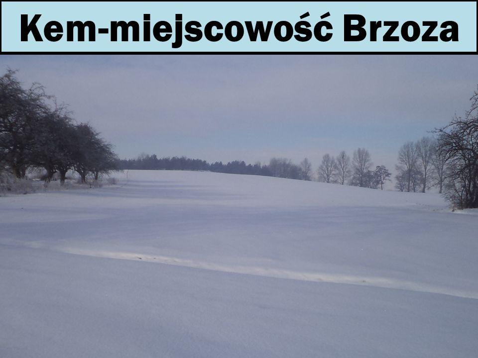 Kem-miejscowość Brzoza