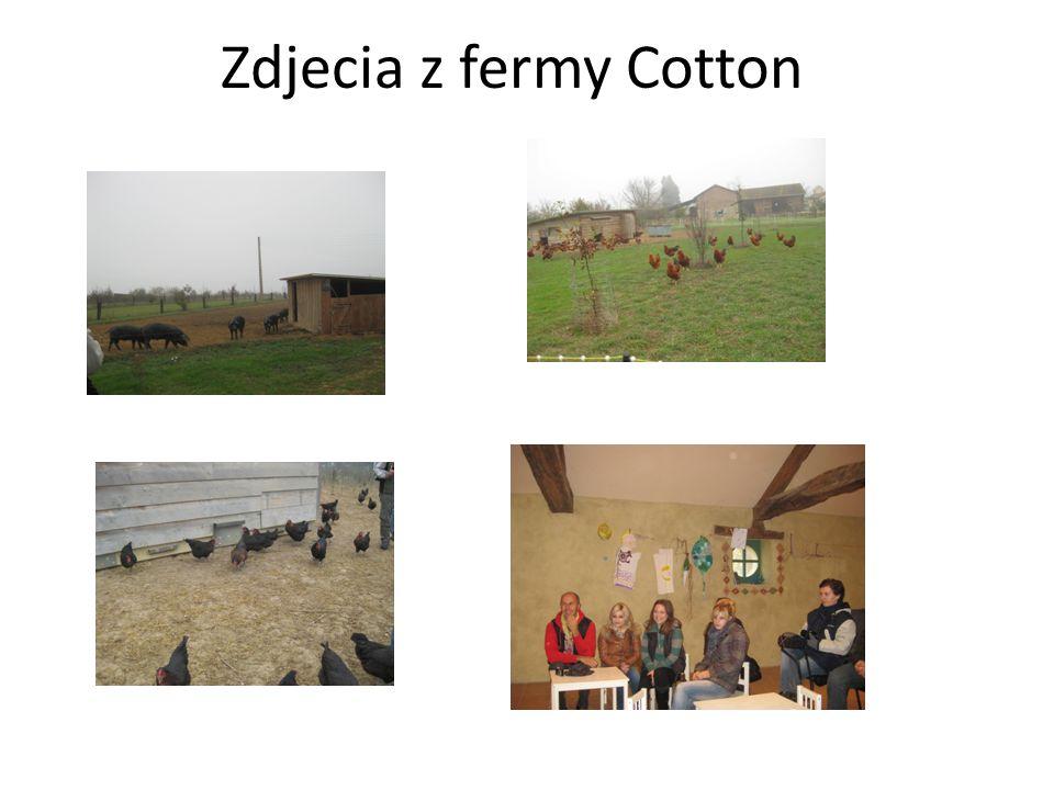 Zdjecia z fermy Cotton