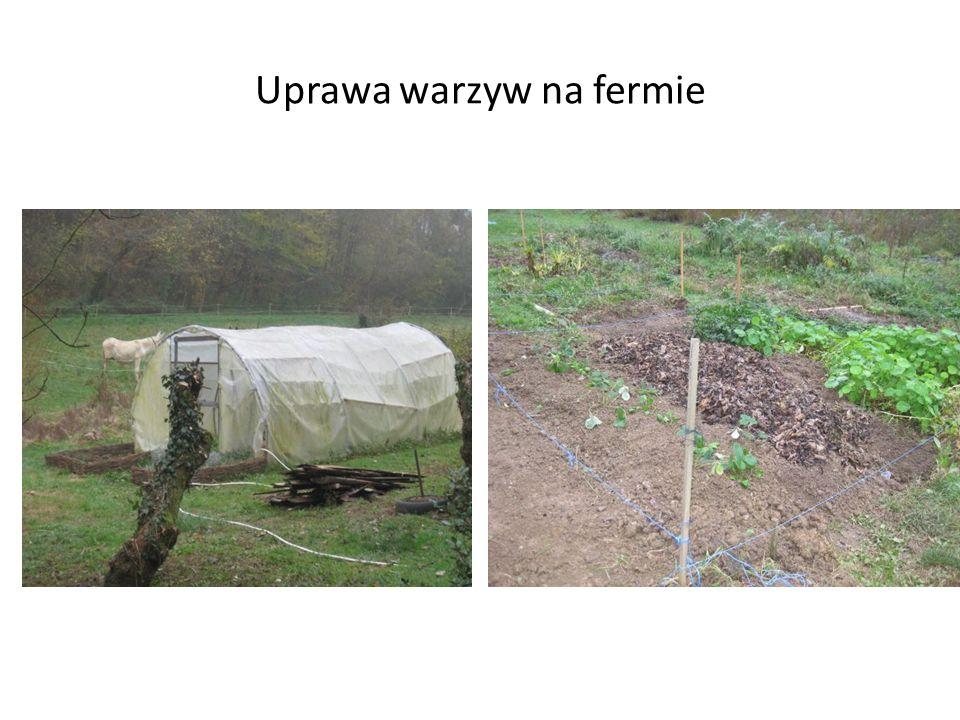 Uprawa warzyw na fermie