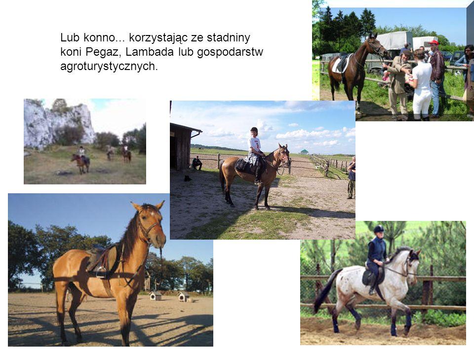 Lub konno... korzystając ze stadniny koni Pegaz, Lambada lub gospodarstw agroturystycznych.