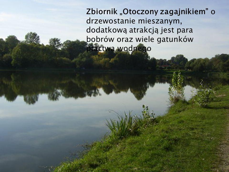 Zbiornik Otoczony zagajnikiem o drzewostanie mieszanym, dodatkową atrakcją jest para bobrów oraz wiele gatunków ptactwa wodnego