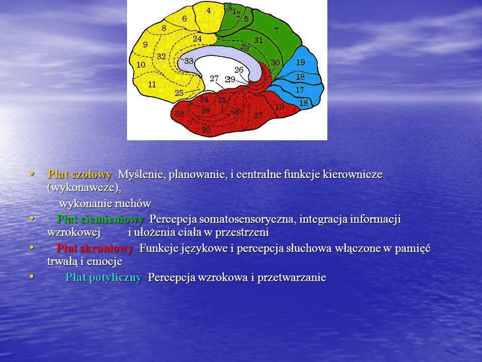 OBSZARY MÓZGU Najbardziej znaną prezentacją obszarów funkcjonalnych kory mózgowej, jest mapa zaproponowana przez niemieckiego anatoma Korbiniana Brodm