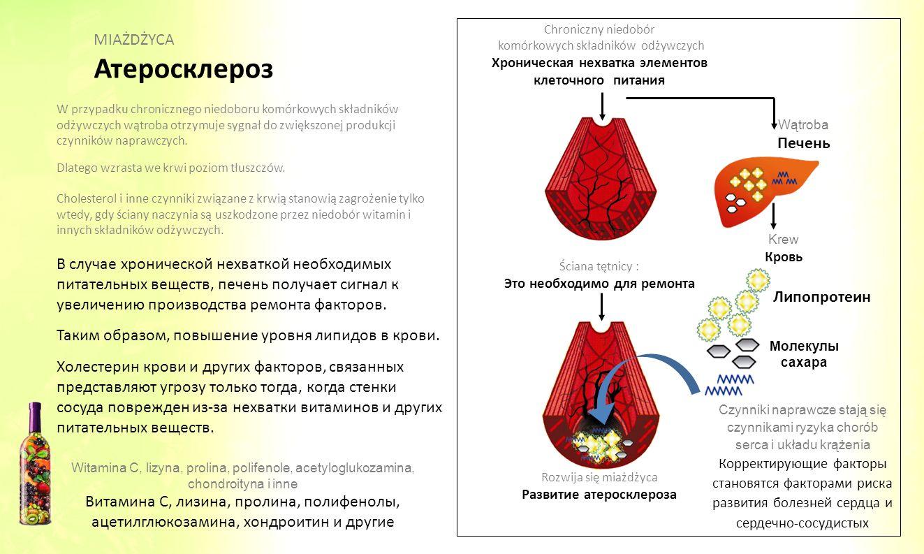 W przypadku chronicznego niedoboru komórkowych składników odżywczych wątroba otrzymuje sygnał do zwiększonej produkcji czynników naprawczych. Dlatego