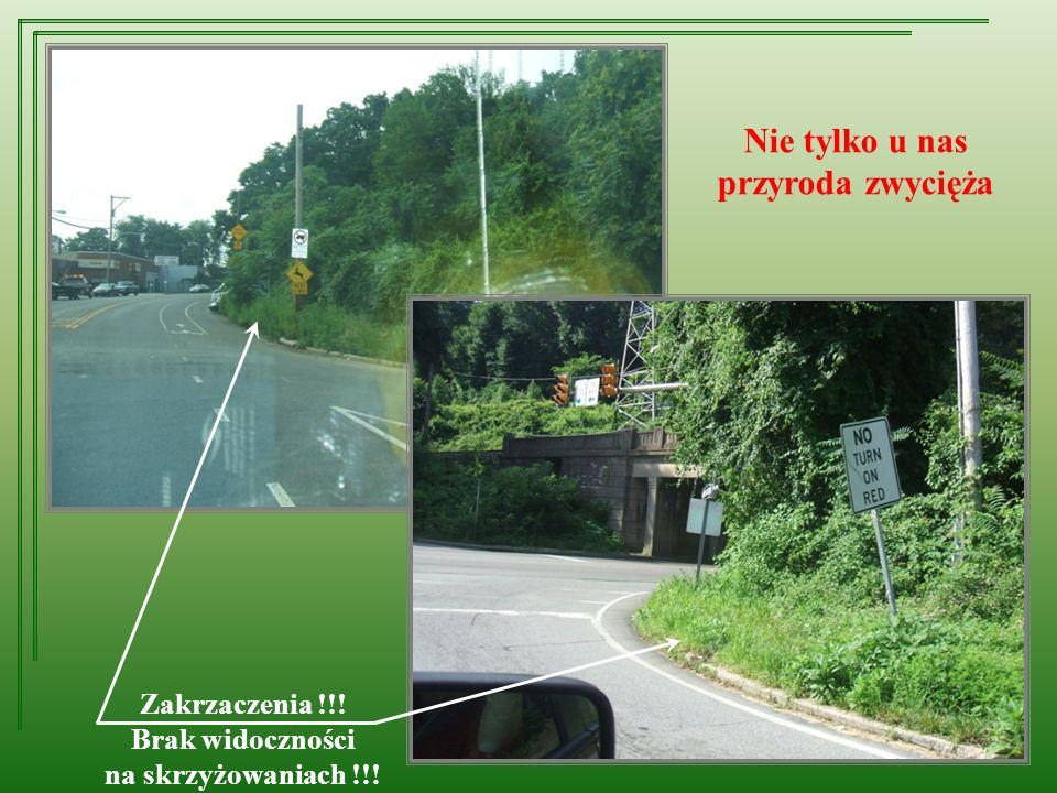 Nie tylko u nas przyroda zwycięża Zakrzaczenia !!! Brak widoczności na skrzyżowaniach !!!
