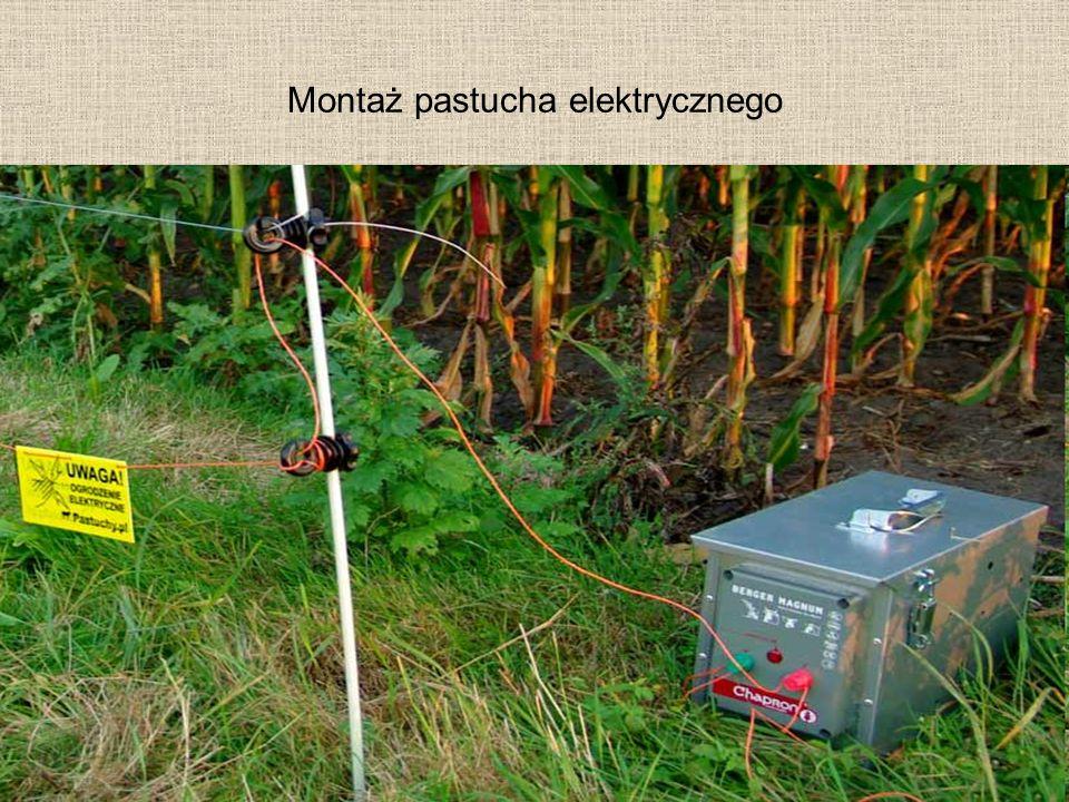 Montaż pastucha elektrycznego