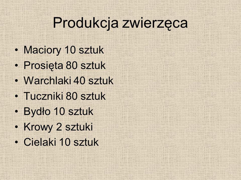 Produkcja zwierzęca Maciory 10 sztuk Prosięta 80 sztuk Warchlaki 40 sztuk Tuczniki 80 sztuk Bydło 10 sztuk Krowy 2 sztuki Cielaki 10 sztuk