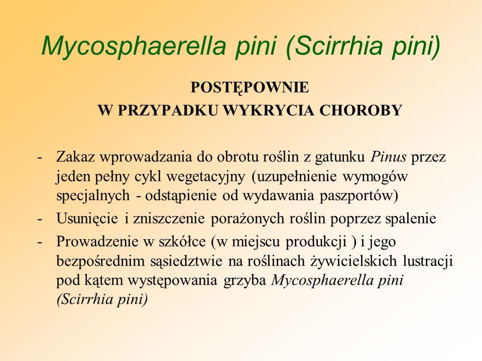 Mycosphaerella pini (Scirrhia pini) POSTĘPOWNIE W PRZYPADKU WYKRYCIA CHOROBY -Systematyczne usuwanie i niszczenie resztek roślinnych, w tym opadłych igieł ze wszystkich roślin żywicielskich (również tych, które nie są regulowane przepisami rozporządzenia MRiRW z dnia 21 lutego 2008 r.