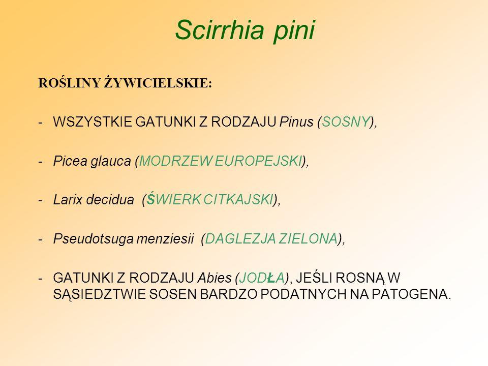 Scirrhia pini WYSTĘPOWANIE: -AMERYKA PÓŁNOCNA, CENTRALNA I POŁUDNIOWA, -NIEKTÓRE OBSZARY AZJI I AFRYKI, AUSTRALIA, NOWA ZELANDIA, -EUROPA, W TYM: Austria, Bułgaria, Francja, Grecja, Hiszpania, Niemcy, Portugalia, Rumunia, Wielka Brytania) Polska – sierpień 2008 r.