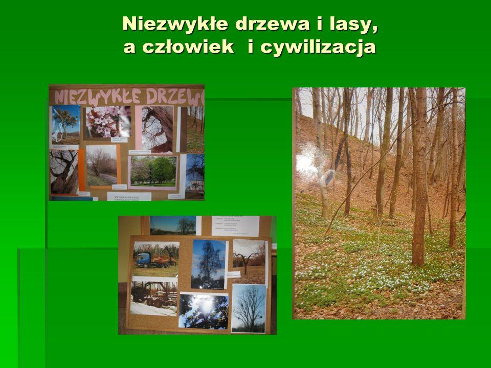 Niezwykłe drzewa i lasy, a człowiek i cywilizacja