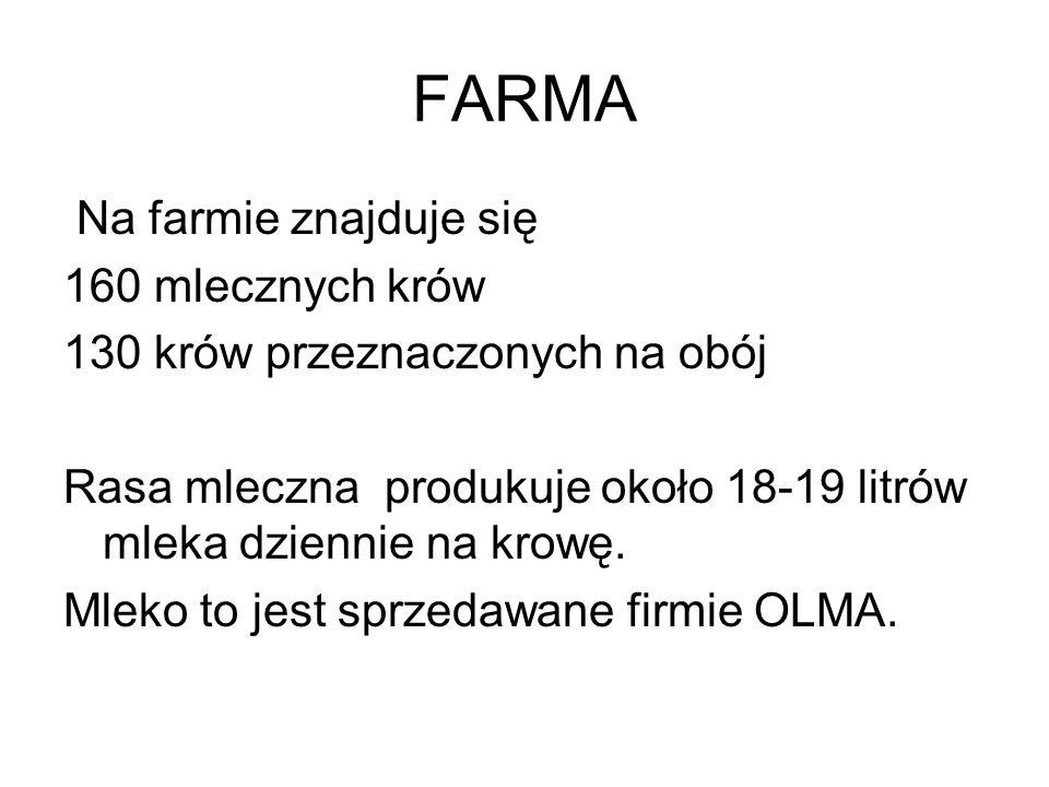 FARMA Na farmie znajduje się 160 mlecznych krów 130 krów przeznaczonych na obój Rasa mleczna produkuje około 18-19 litrów mleka dziennie na krowę.