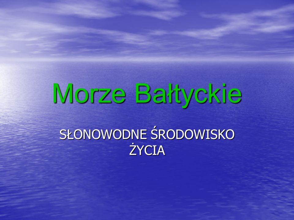 Morze Bałtyckie SŁONOWODNE ŚRODOWISKO ŻYCIA