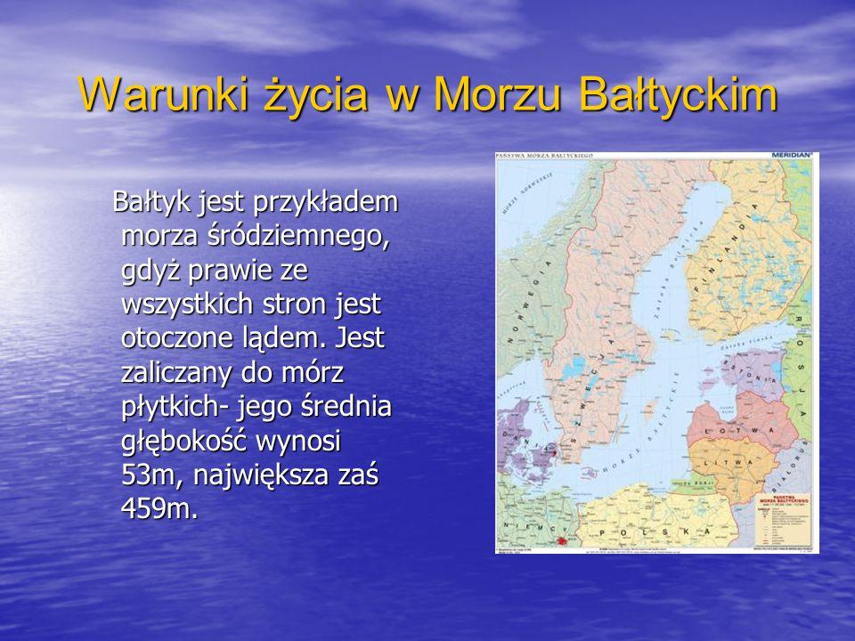 Warunki życia w Morzu Bałtyckim Bałtyk jest przykładem morza śródziemnego, gdyż prawie ze wszystkich stron jest otoczone lądem. Jest zaliczany do mórz