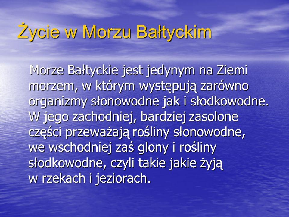 Życie w Morzu Bałtyckim Morze Bałtyckie jest jedynym na Ziemi morzem, w którym występują zarówno organizmy słonowodne jak i słodkowodne. W jego zachod