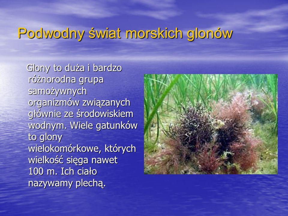 Podwodny świat morskich glonów Glony to duża i bardzo różnorodna grupa samożywnych organizmów związanych głównie ze środowiskiem wodnym. Wiele gatunkó