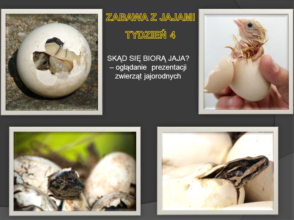 SKĄD SIĘ BIORĄ JAJA? – oglądanie prezentacji zwierząt jajorodnych