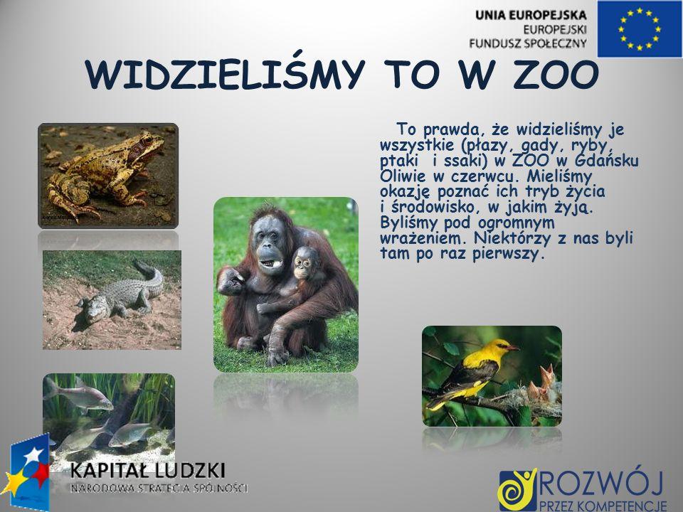 WIDZIELIŚMY TO W ZOO To prawda, że widzieliśmy je wszystkie (płazy, gady, ryby, ptaki i ssaki) w ZOO w Gdańsku Oliwie w czerwcu. Mieliśmy okazję pozna