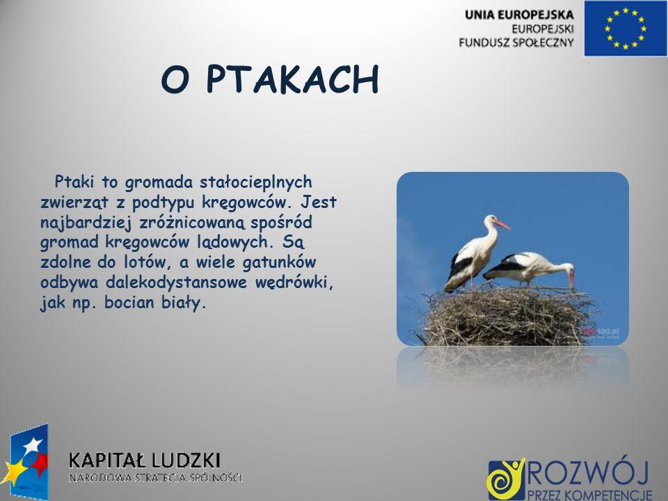 O PTAKACH Ptaki to gromada stałocieplnych zwierząt z podtypu kręgowców. Jest najbardziej zróżnicowaną spośród gromad kręgowców lądowych. Są zdolne do