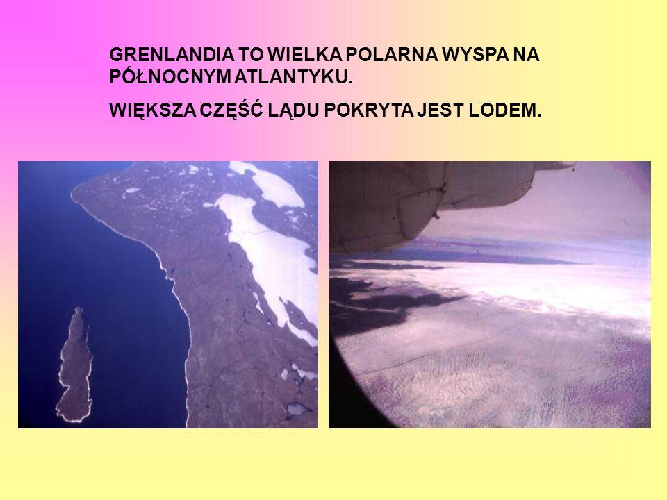 Pies grenlandzki, którego ojczyzną jest, jak wskazuje nazwa, Grenlandia należy chyba do najbardziej wytrzymałych psów zaprzęgowych.