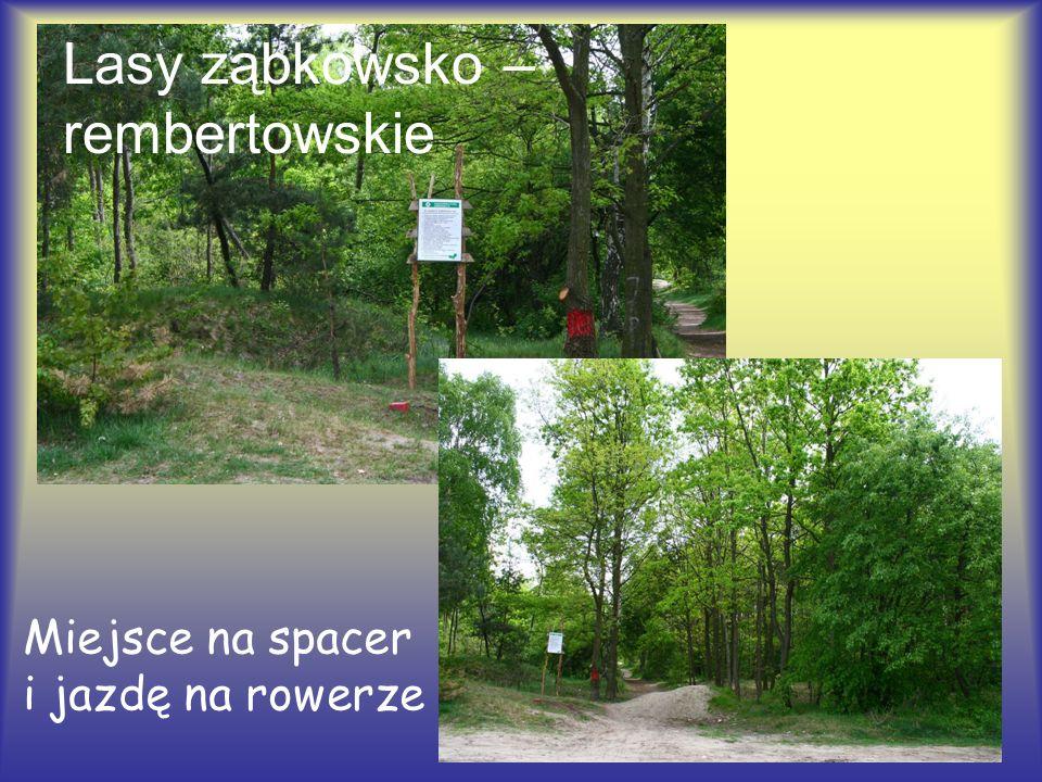 Lasy ząbkowsko – rembertowskie Miejsce na spacer i jazdę na rowerze