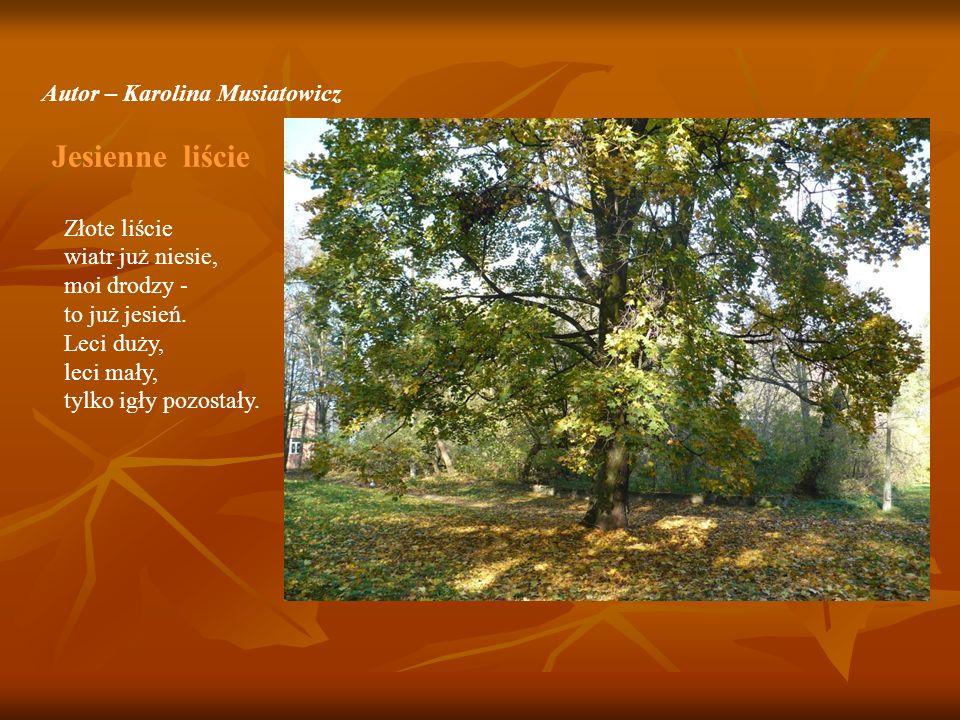 Autor – Karolina Musiatowicz Jesienne liście Złote liście wiatr już niesie, moi drodzy - to już jesień. Leci duży, leci mały, tylko igły pozostały.