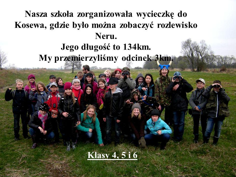 Nasza szkoła zorganizowała wycieczkę do Kosewa, gdzie było można zobaczyć rozlewisko Neru. Jego długość to 134km. My przemierzyliśmy odcinek 3km. Klas