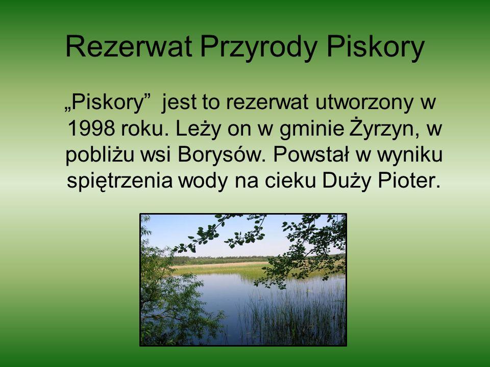 Rezerwat Przyrody Piskory Piskory jest to rezerwat utworzony w 1998 roku. Leży on w gminie Żyrzyn, w pobliżu wsi Borysów. Powstał w wyniku spiętrzenia