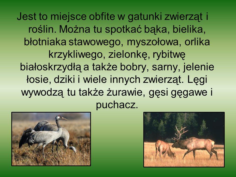 Jest to miejsce obfite w gatunki zwierząt i roślin. Można tu spotkać bąka, bielika, błotniaka stawowego, myszołowa, orlika krzykliwego, zielonkę, rybi