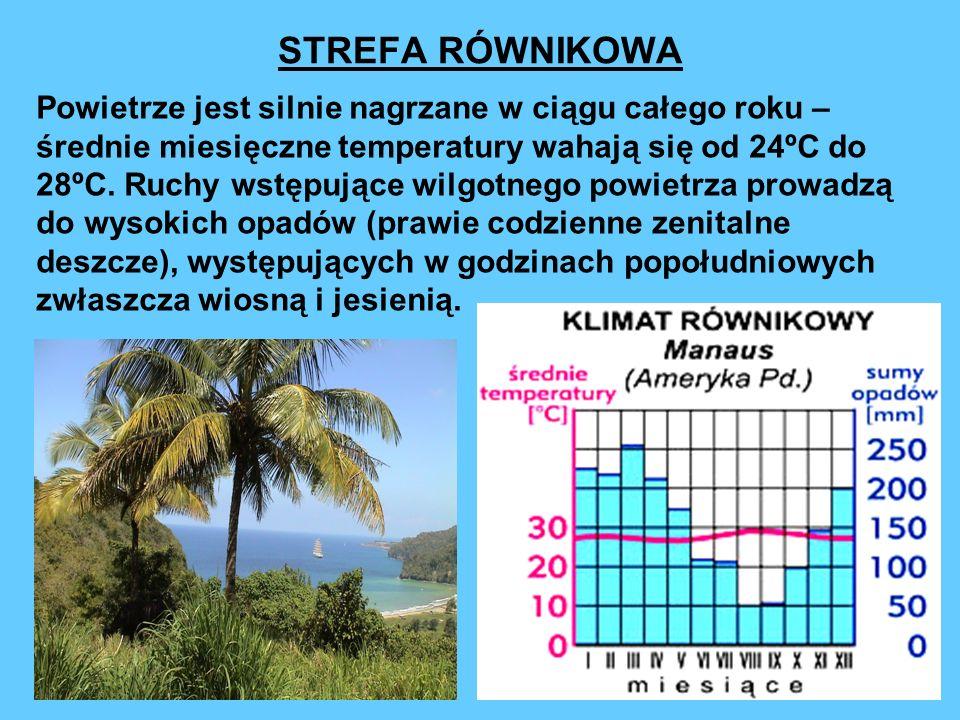 STREFA RÓWNIKOWA Powietrze jest silnie nagrzane w ciągu całego roku – średnie miesięczne temperatury wahają się od 24ºC do 28ºC. Ruchy wstępujące wilg